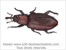 A3d le traitement des bois et des charpentes for Insecte qui mange le bois